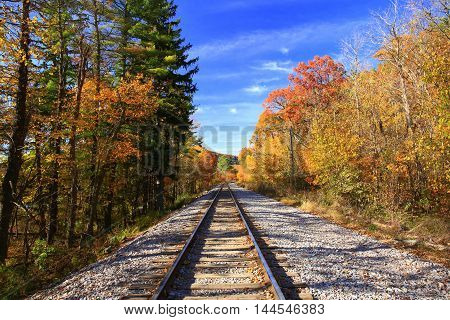 Railroad tracks surrounded by autumn colors continuing into the horizon