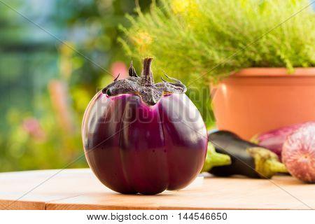 Big fresh organic round purple eggplant Violet