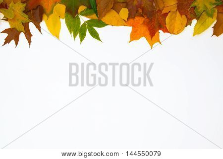 Top row of leaves on a white background. Fall decoration.