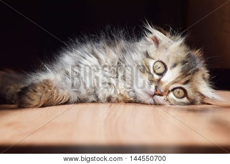 cute fluffy kitten basking in the sun in the summer