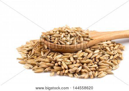 Organic Oat Grains