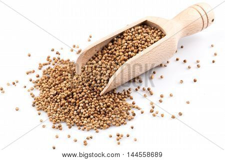 Coriander Seeds In Wooden Scoop