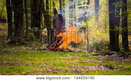 A dry tree burns in the forest. The incident in the national Park.