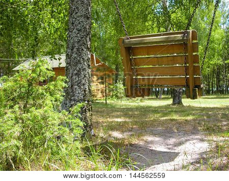 Swing on the chain on the sunny lawn in a birch forest near the country house