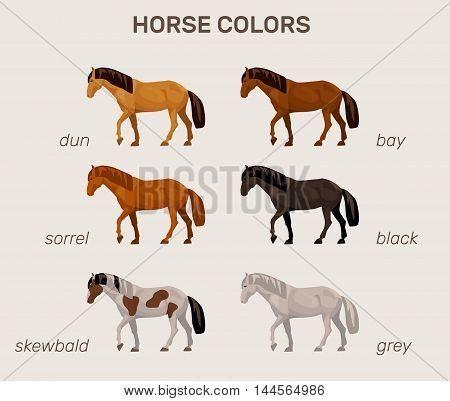 illustration with a set of main horse colors