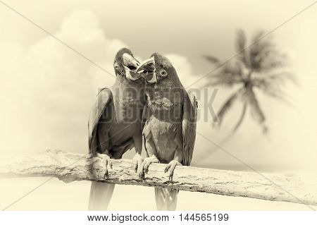 Parrot (severe Macaw) On Branch On Tropical Background. Vintage Effect