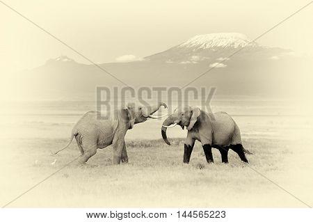 Elephant With Mount Kilimanjaro. Vintage Effect