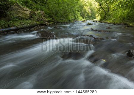 A river with rapids in the woods.