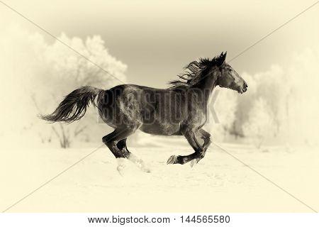Horse Runs Gallop. Vintage Effect