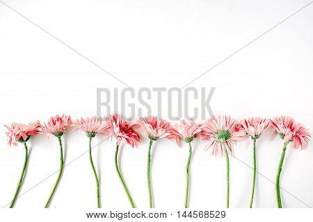 Creative arrangement of gerberas on white background. Flat lay.