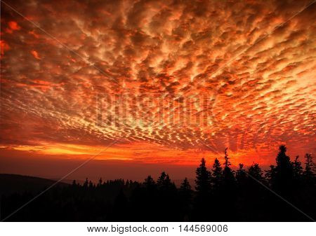 Hell dramatic dark red sky landscape with black forest