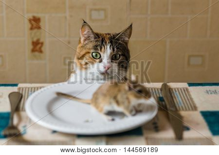 Cat looking to little gerbil mouse on the table with plate and serving cutlery. Concepts of prey, food, pest.