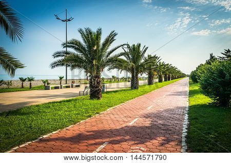 Seaside promenade with palms in Batumi Georgia