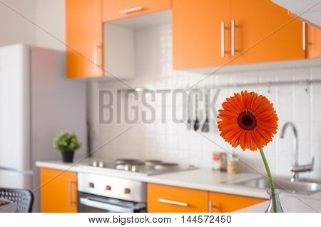 Modern orange kitchen with red gerbera on the foreground