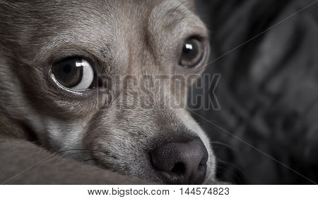 A sad and lonely dog looking into the camera - concept for stray dogs and animal abuse.