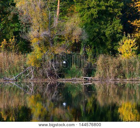 Changing colors. Autumn landscape at the Tisza backwater in Tiszadob, Hungary.