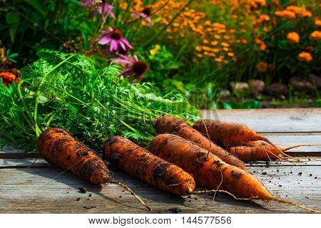 fresh organic carrots on wooden desk background with blurred flowered garden
