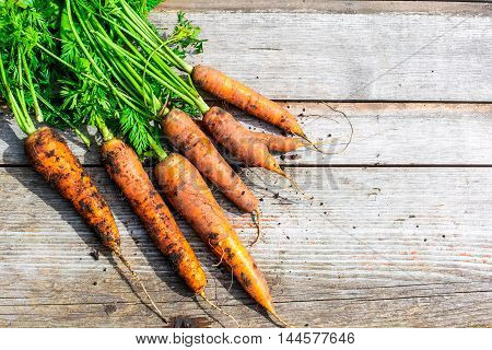 bunch of fresh harvested carrots with green leaves over wooden background