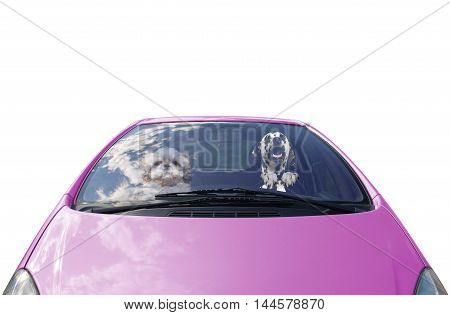 two happy dogs drives the car -- isolated on white