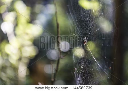 Spiderweb in forest with nice blurry background and natural light.
