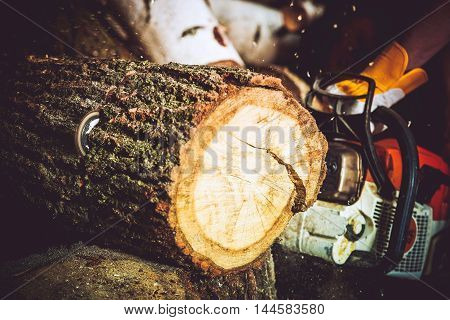 Wood Log Cut by Gasoline Wood Cutter. Closeup Photo. Forestry Works.