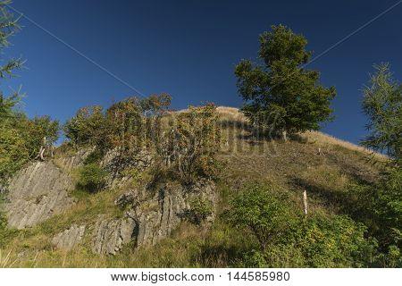 Rowan berry trees and rock near Velky Spicak hill