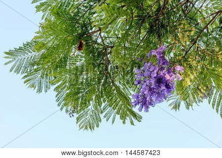 Purple Flower and Green Tree in the Sky