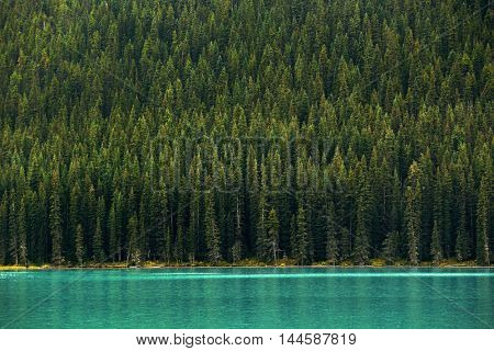 Forest and lake in National Park, Canada.
