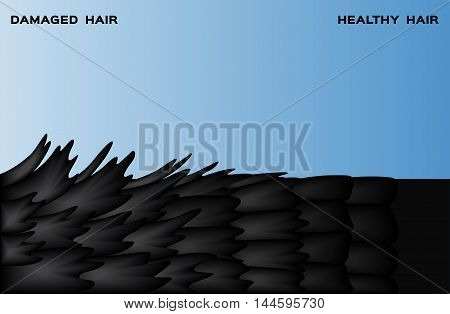 damaged hair and normal hair on blue background