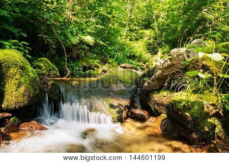 Small mountain creek in a dense forest