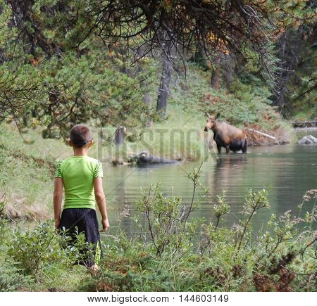 boy looking at moose he wandered upon hiking trail around pond
