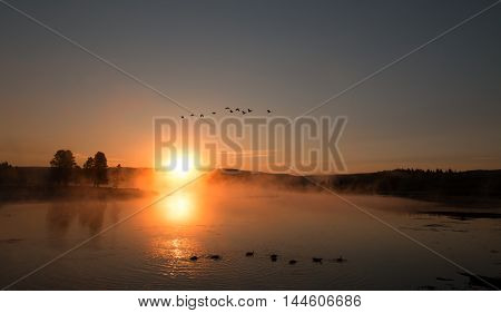 Sunrise mist on the Yellowstone River with Canadian Geese flying over Geese and Swans in the Hayden Valley of Yellowstone National Park in Wyoming US