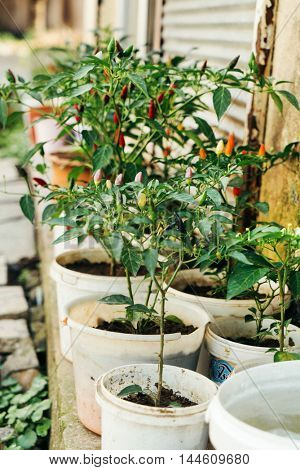 pepeprs on the pot