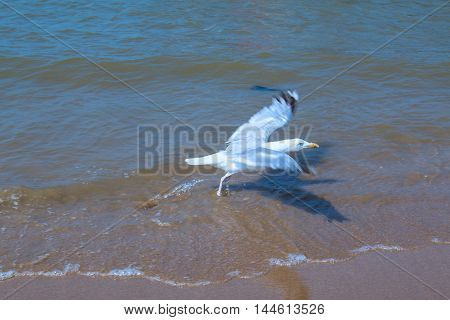 Beautiful a seagull sea photographed close up, blurred selective focus.