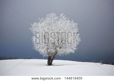 white frosted tree against the stormy sky