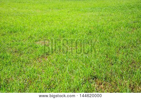 Green meadow grass field for football in Thailand