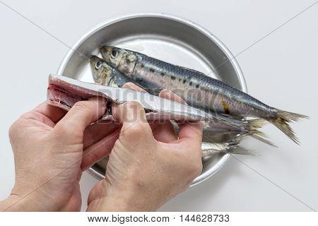 Gutting fresh raw sardine fish by hands in the kitchen