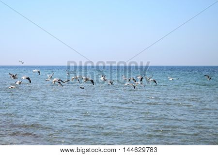 many gulls flying low over the sea