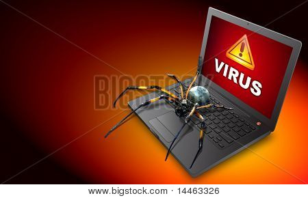 A spider on a laptop