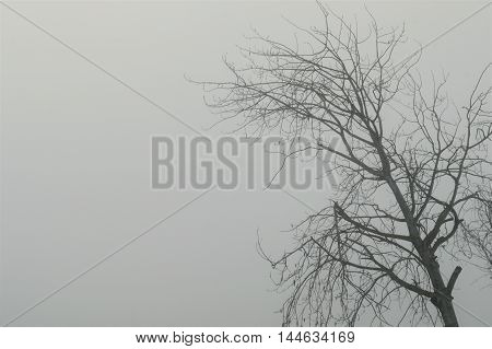 Trees in fog in the morning ower gray background.