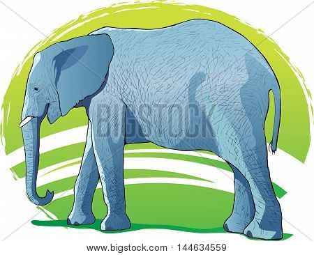 The image of the African elephant. Trunk, large ears, tail - the elephant as is. Without a background.