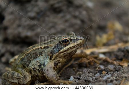 Frog closeup active, advertisement, amazon, amazonas, america