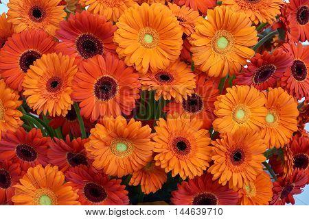 Many orange gerberas in beautiful flower arrangement