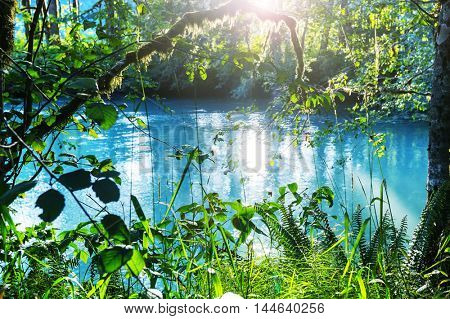 Beautiful small river in forest