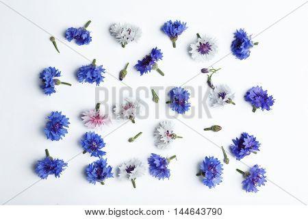 Bluett flowers scattered on white background