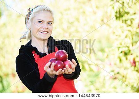 Woman picker portrait in apples orchard