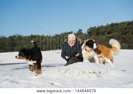 owner with big dogs in snow landscape