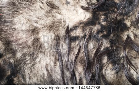 Fur. The Coat Of The Animal. The Fur Of The Animal. Texture Background