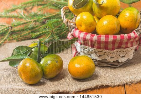 Card with Tangerines in plate and Branch of Coniferous on wooden background