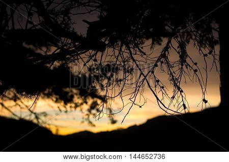 Beautiful dawn with tree sticks at sri lanka